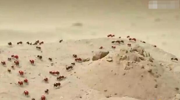 世界上最可怕的蚂蚁,沙漠行军蚁(一秒钟让你连骨头都不剩)