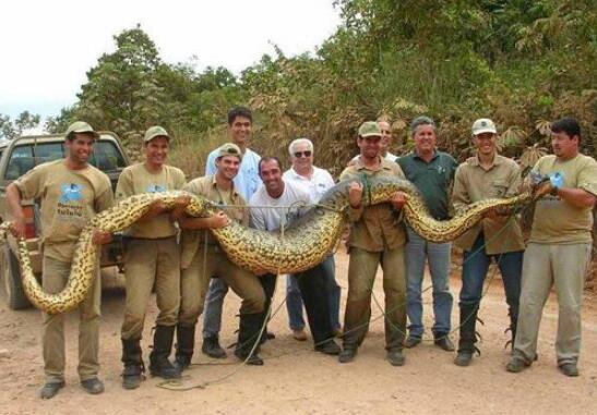现今世界最大蟒蛇,亚马逊巨蟒(史上最大蟒蛇塞雷洪泰坦蟒)