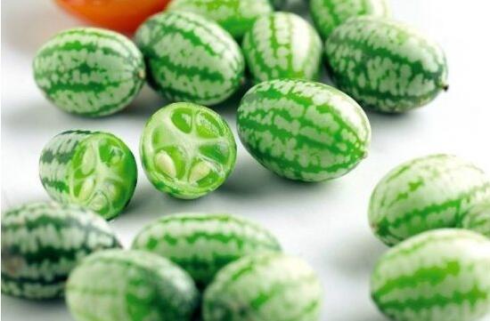 世界上最大的西瓜,重达316斤(最小的拇指西瓜10g都没有)