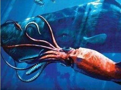 世界上最大乌贼,大王酸浆鱿(又叫巨枪乌贼体长20米以上)