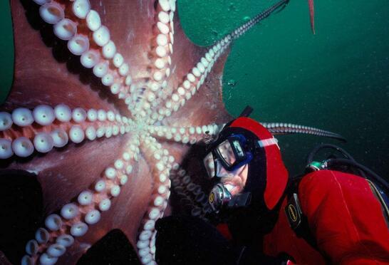 世界上最大的章鱼,北太平洋巨型章鱼(重达272公斤)
