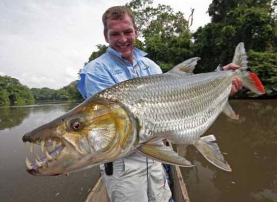 世界上最大的淡水鱼,巨型水虎鱼(长1.8米/重达114斤)