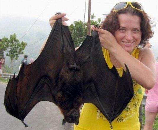 关于蝙蝠的大众彩票投注网站,世界上最大的蝙蝠既然长1.8米