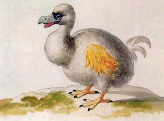 渡渡鸟卡通_世界上最贵的鸟类化石,渡渡鸟(拍出440万美元天价)(2) — 度哥 ...
