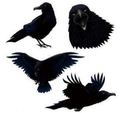 乌鸦悖论竟能证实天下乌鸦一般黑,其实是一种伪科学