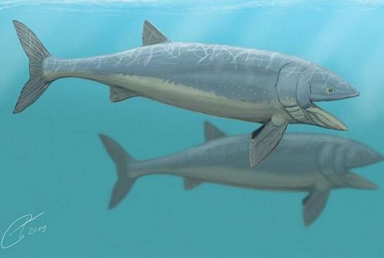 有史以来最大的鱼类,侏罗纪利兹鱼(长达27米)