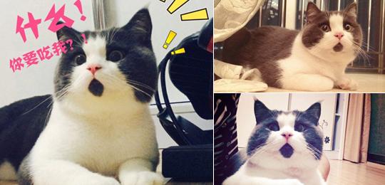 惊讶猫走红网络 盘点这些年走红网络的喵星人,惊讶猫被活活玩死