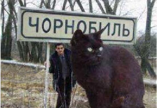 726斤的乌克兰巨猫Angie,世界上最大的猫(乃PS作品)