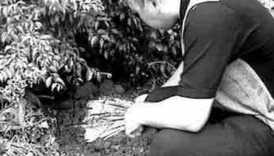 香港雨夜屠夫林过云杀人成瘾,奸杀后竟肢解肢体做标本