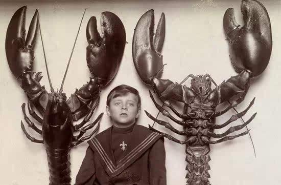 8.美国龙虾