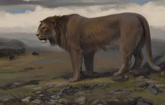 史上体形最大的猫科动物,揭秘洞狮灭绝的原因