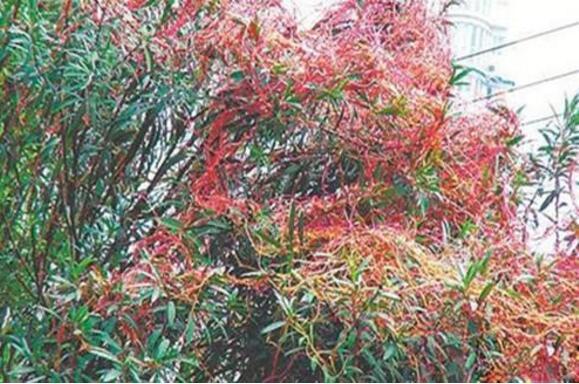 最恐怖的吃人植物吸血树,被缠住后会吸光你的血