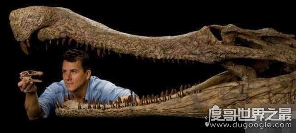 最凶残的五大远古巨鳄,猪鳄专门捕食恐龙