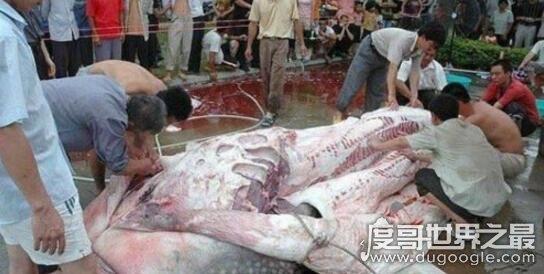 盘点巨型食人鱼吃人事件,剖开鱼肚发现人类骸骨