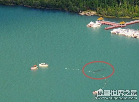 新疆喀纳斯湖水怪真相之谜,乃长达10米的巨型哲罗鲑