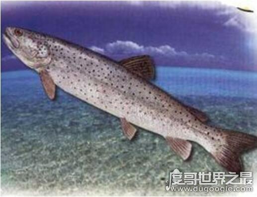 长达15米的巨型哲罗鲑现身,新疆喀纳斯湖水怪真相被揭开