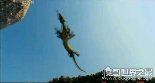 辽宁营口坠龙事件真相,传说中的龙是否真的存在