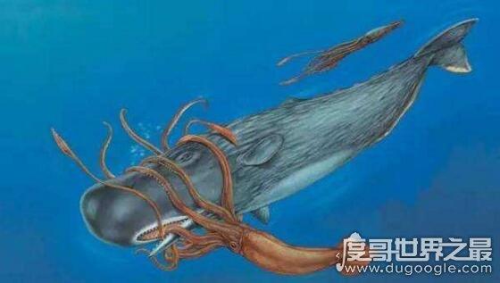 抹香鲸vs大王乌贼视频,大王乌贼不过是战五渣被完虐