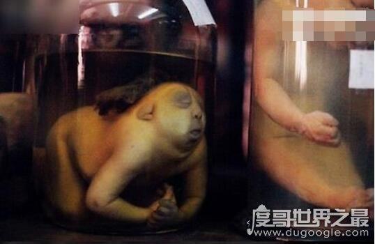 走进泰国恐怖博物馆,陈列着各种畸形变态的死尸(胆小勿进)