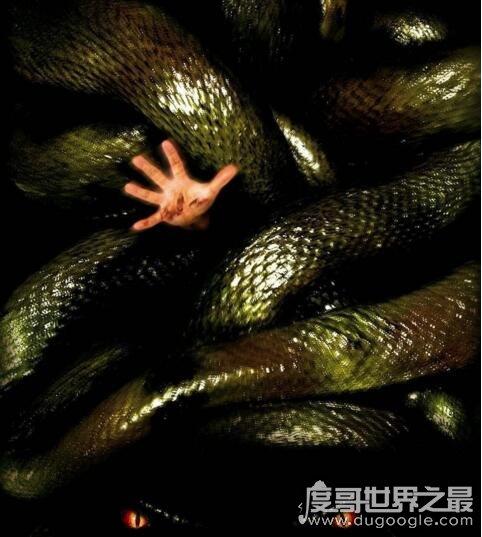 关于蛇的电影大全,香港电影青蛇评分8.4最经典