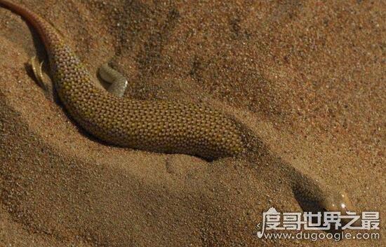 生存于死亡谷的沙漠鱼,可塑性极强能随时变异