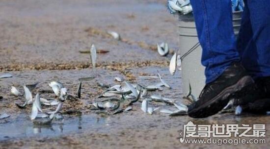 空中下起鱼雨怎么回事,上万条鱼从空中落下(自然现象)