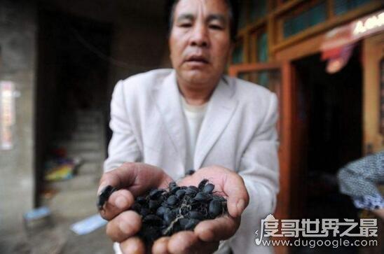 中国十大死亡村,云南死亡村频繁死人的人间地狱
