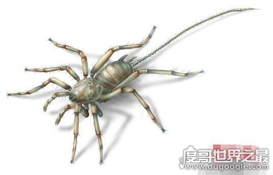 发现亿年前远古蜘蛛,应氏奇美拉蛛竟然有尾巴还有6只眼