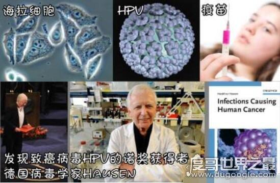 永生不死的海拉细胞,或将为人类长生不老不死圆梦