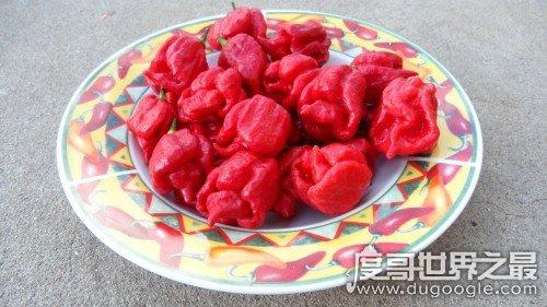 世界上最辣的辣椒排名,卡罗来纳死神辣度是麻辣火锅200倍