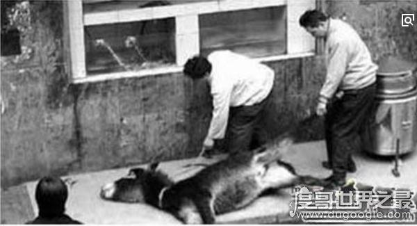 中国十大禁菜之铁板甲鱼,人性太残忍(活煮甲鱼)