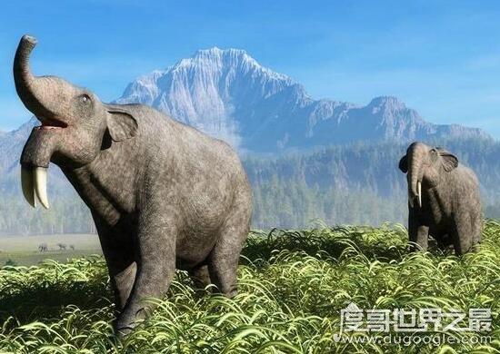 体型庞大的恐象,将非洲象衬托的格外娇小(体重超过15吨)