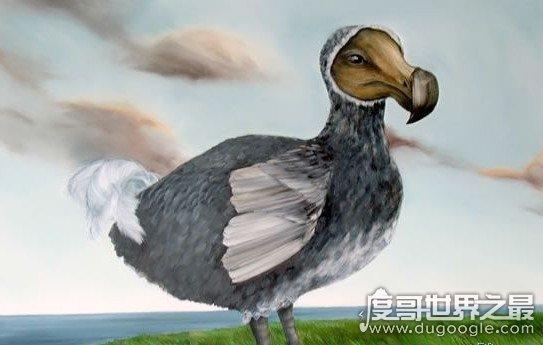 揭秘渡渡鸟迅速灭绝的真相,疑是被人类残忍杀害为食