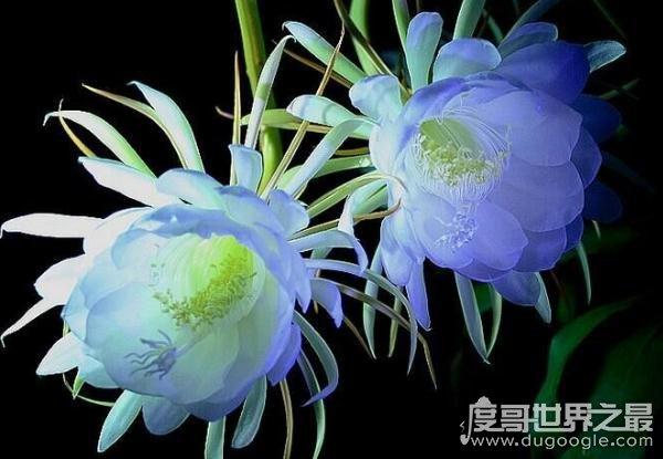 关于花的8个大众彩票投注网站,嘴唇花鲜红娇嫩(最性感)