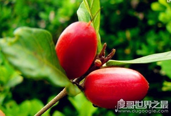 世界上最稀有的十种水果,可能除了蛇皮果其他都没见过