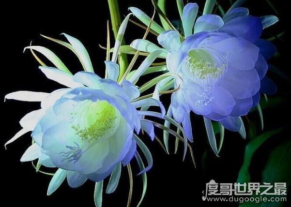 盘点世界十大最美的花,一眼让人惊叹的花容(附花语)