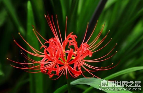 盘点欧冠万博官网登陆最美的花,一眼让人惊叹的花容(附花语)