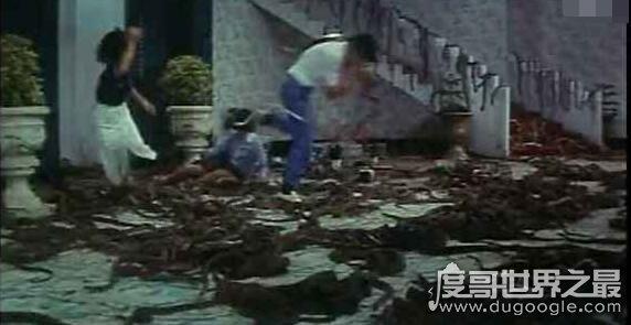 中国八三年蛇灾之谜,实际是83年安康特大洪水引发的
