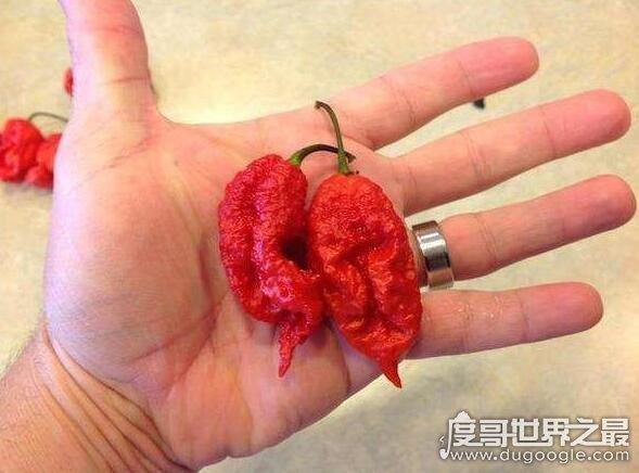 世界上最辣的辣椒,卡罗来纳死神比警用辣椒喷雾还辣