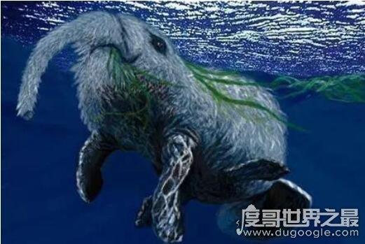 白毛象鼻的神秘南非海怪,其实是南象海豹的特殊状态