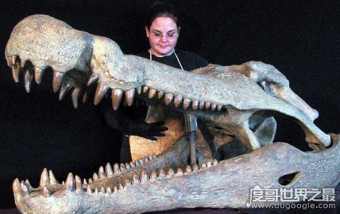 帝鳄是史前最恐怖的鳄鱼,能长到13米以恐龙为食