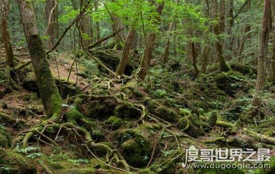 日本自杀森林,青木原树海一年搜出近百具尸体(死法多样化)