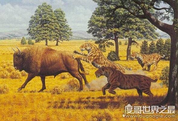 史前美洲霸主异剑齿虎,身处食物链顶端却以腐肉为主