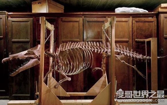 凶残的伊西斯龙王鲸,以捕猎鲨鱼为食(是当时最大的掠食动物)