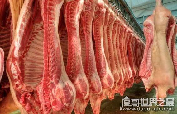 回族人不吃猪肉的真相竟是这,由内而外的肮脏让人不敢吃