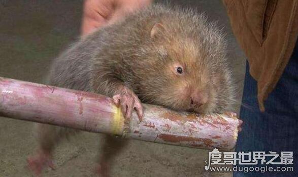 卖竹鼠是什么梗,UC浏览器上被网友们调侃的不靠谱新闻
