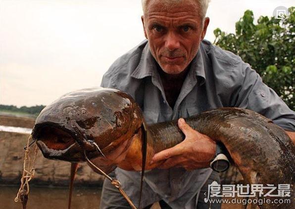 顽强的非洲杜兹肺鱼,离开水不吃不喝还能存活数年(图片)