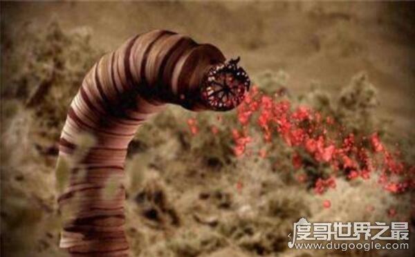科幻般的蒙古死亡蠕虫真的存在,能放出强电流秒杀数米外生物