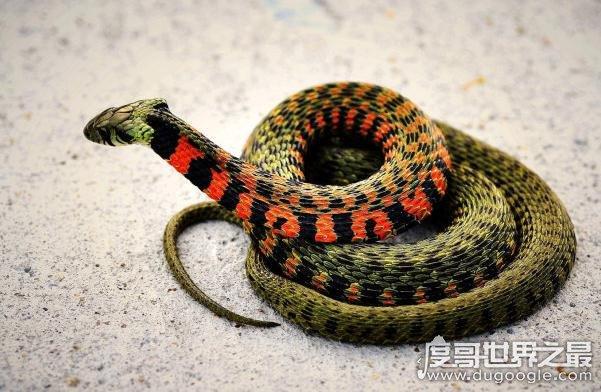 人类恐蛇背后的心理分析,研究称灵长类动物有怕蛇的天性