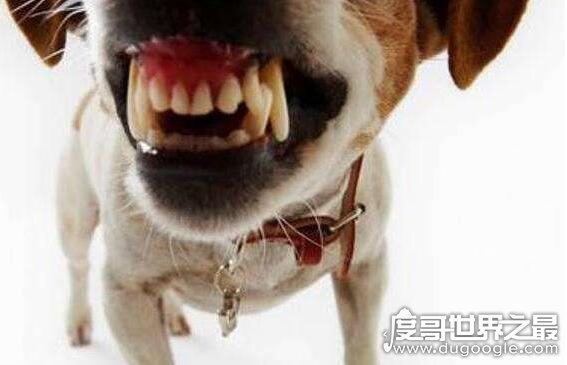 狗咬我十天后死了 狗咬我十天后死了,证明狗没有患狂犬病(十日观察法判定)